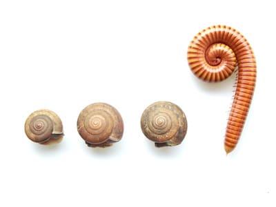 Le harcèlement scolaire ou l'histoire du mille-pattes et de l'escargot